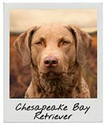 Retriever Dog Charm Sterling Silver for Bracelet Hunting Chesapeake Lab Hunt